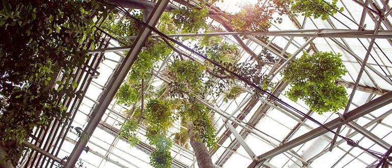 Сибирский ботанический сад Томск