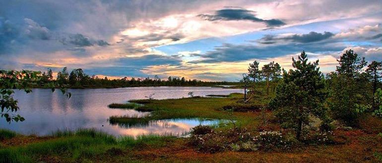 Васюганские болота Томск