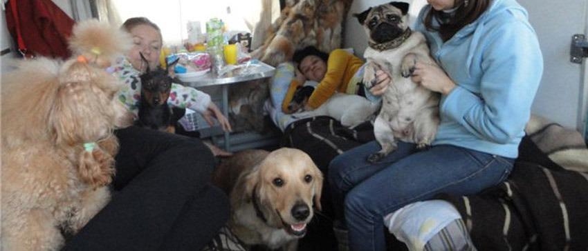 Правила перевозки домашних питомцев на поезде: мелкиех зверьков, крупных собак, стоимость проезда