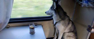Поезд между Москвой иСанкт-Петербургом стал самым популярным вРоссии дляперевозки животных